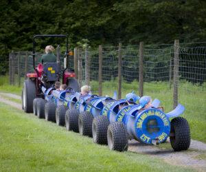 Wild boar barrels